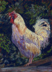 paintingday/white_rooster.jpg